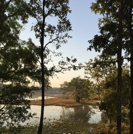 early morning in lovely Kanha National Park, home to 94 known tigers